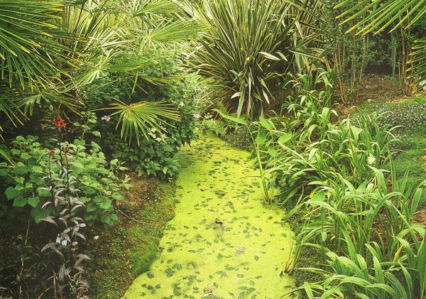 Un jardin aquatique exotique rustique jardins for Paysagiste jardin exotique