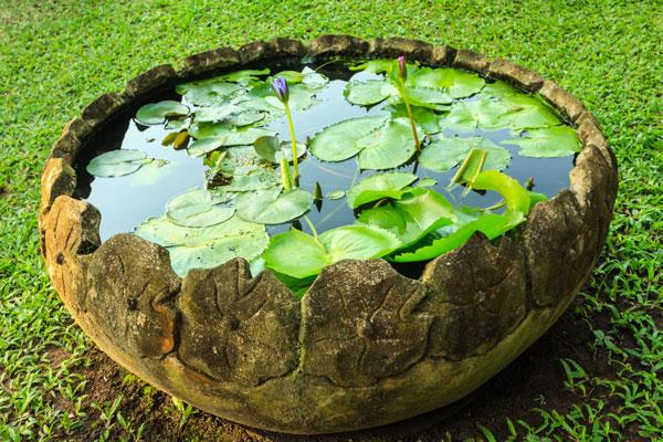 L 39 Eau Donne Vie Aux Petits Espaces Jardins Aquatiques