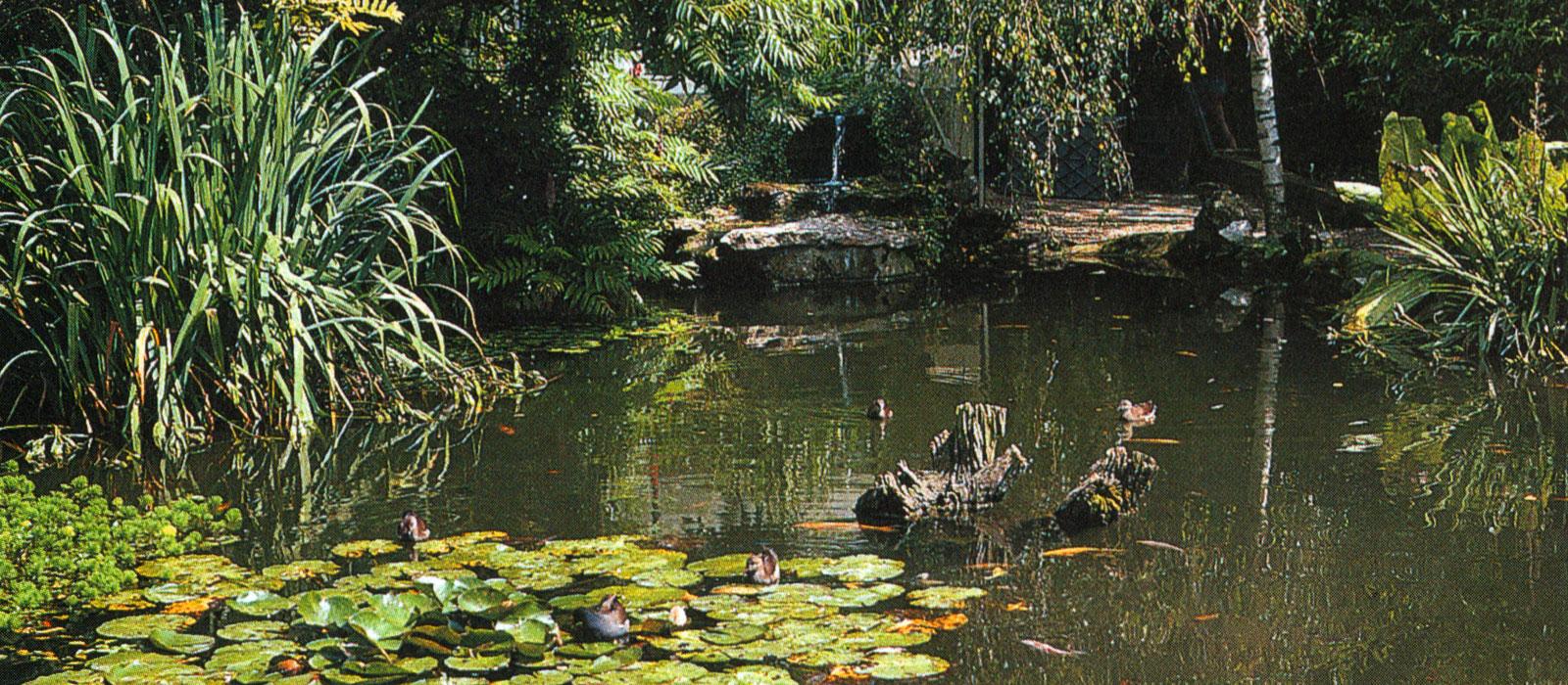 Créez votre étang sauvage pour préserver de la ...